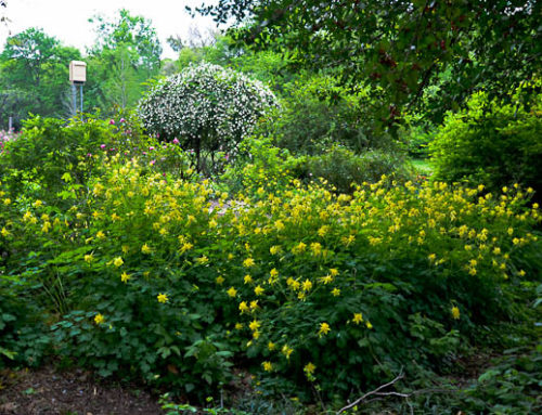 Texas Perennial Garden – Top Ten Summer Perennials