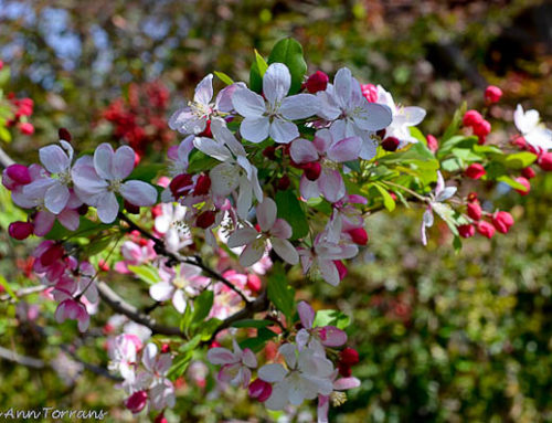 Flowering Trees in Texas an Overview