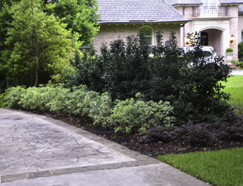 Best Shrubs for Texas