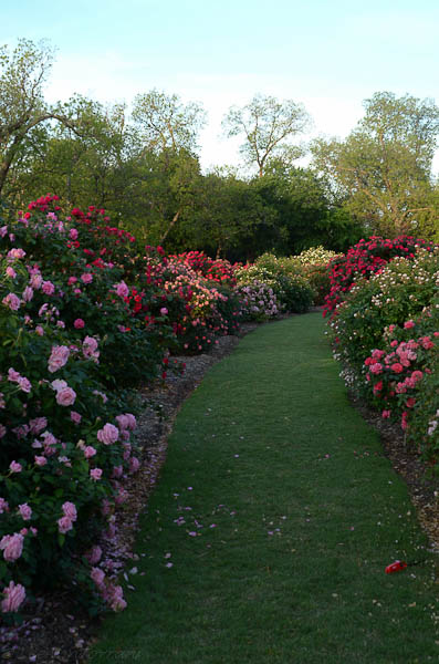 Lee-Ann-Torrans-Texas-Roses