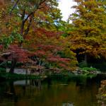 Lee Ann Torrans Japanese Gardens