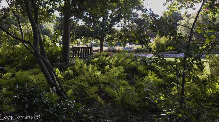 Fern Garden Dallas, Texas Arboretum