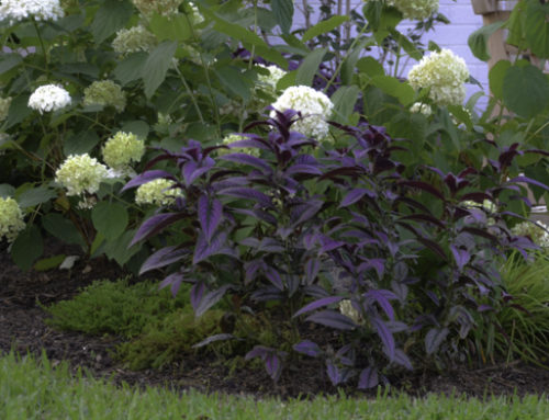 Perfect Perennial Shade Garden