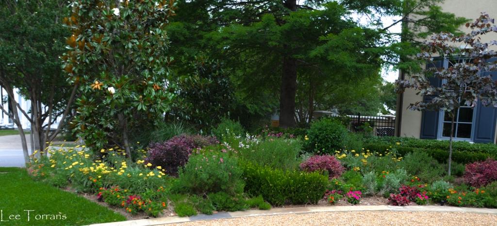 June Perennial Border with Loropetalum Accent