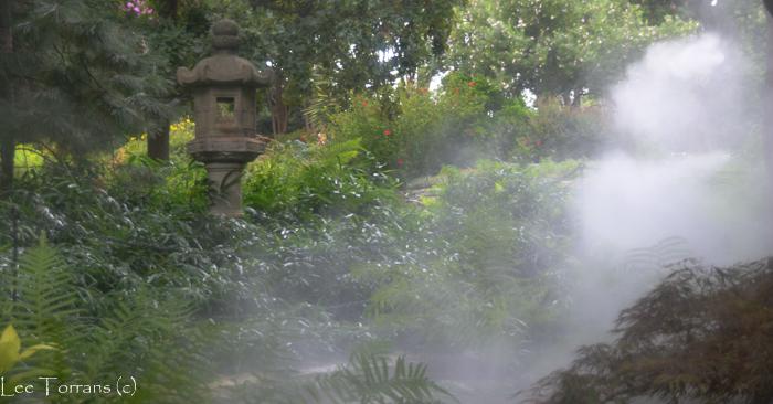 Tree_Fern_Arboretum_Lee_Ann_Torrans-2