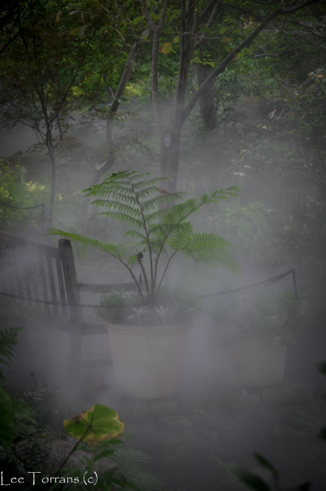 Tree_Fern_Arboretum_Lee_Ann_Torrans