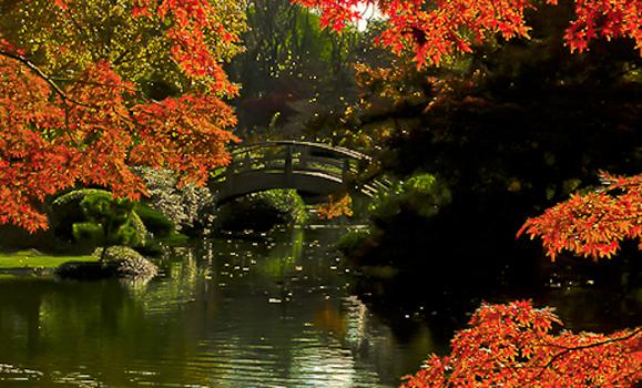 Lee Ann Torrans Japanese Gardening