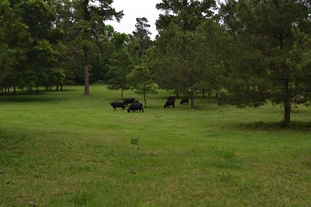 Texas Gardens