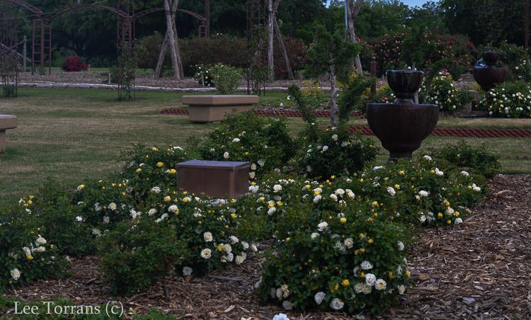 Carrollton_Rose_Garden_Dallas_Lee_Ann_Torrans-2