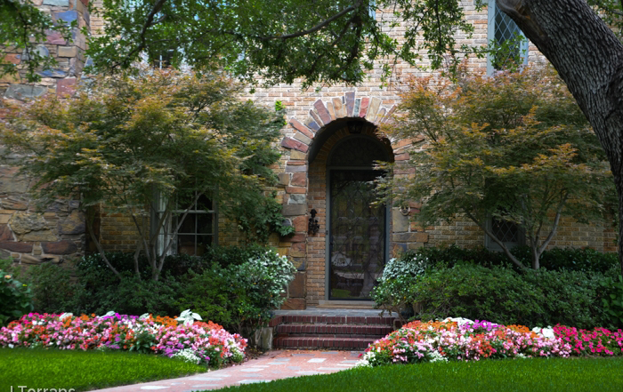 Landscaping design in Dallas often includes Japanese Maples to frame the entrance. Careful thought is given to blending the color of the Japanese Maple with the finish of the house.