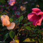 Dallas Landscaping Lee Ann Torrans