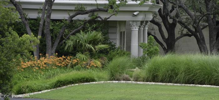 Ornamental Grass in Texas