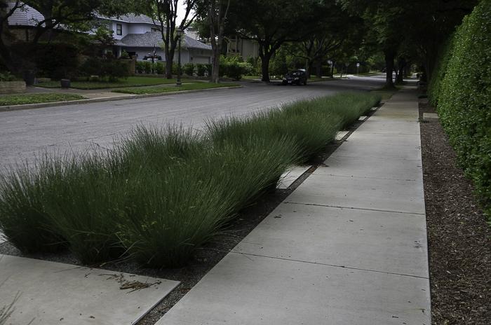 Ornamental_Grass_Texas