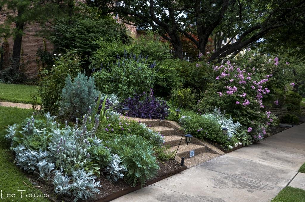 June Perennials in Texas