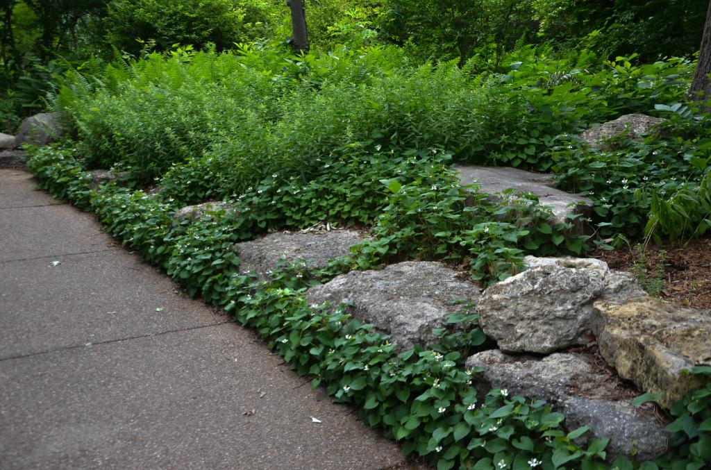 Sweet Violet Dallas Landscaping Lee Ann Torrans Garden Gates and Doors