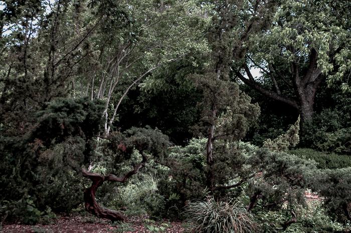Dallas Landscaping Cedars Lee Ann Torrans