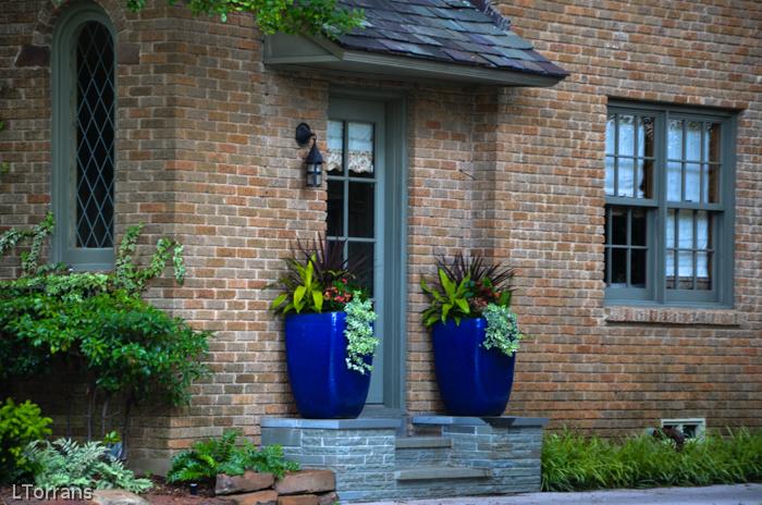 Container Gardening Blue
