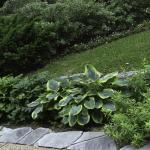 Hostas in Texas - Dallas Landscaping and Gardening Lee Ann Torrans
