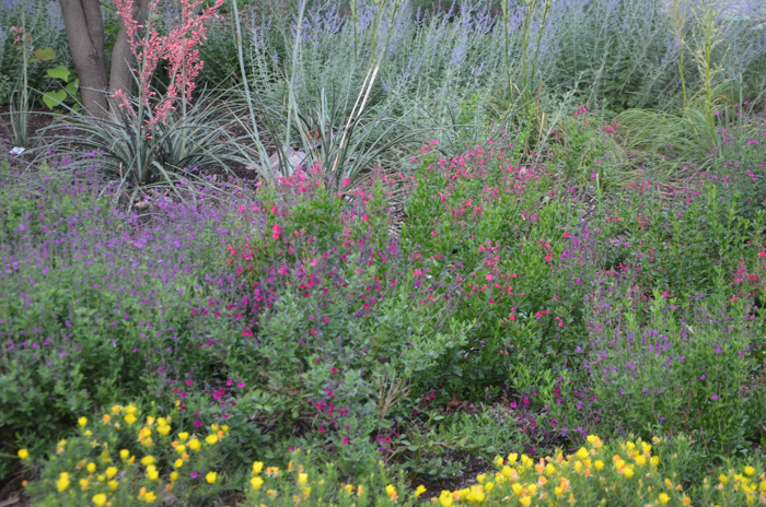 June Blooming Perennials in Texas