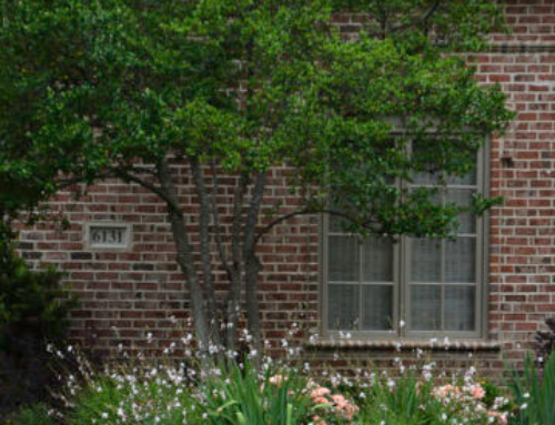 Dallas Landscaping May Bloomers