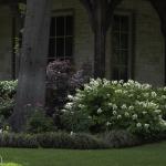 Hostas Dallas Landscaping Lee Ann Torrans