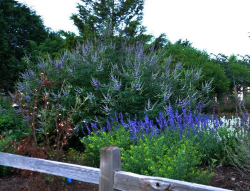 June Perennials for Texas