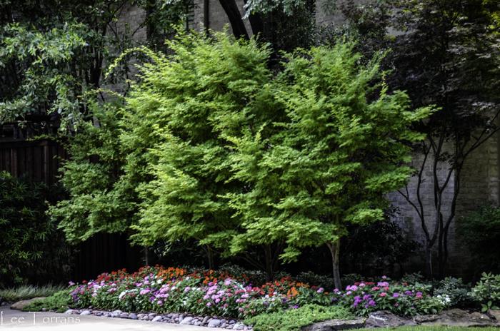 Dallas_Best_Landscaping_Design_Lee_Ann_Torrans_Dallas_Gardening-2