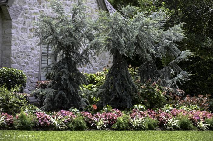 Dallas_Best_Landscaping_Design_Lee_Ann_Torrans_Dallas_Gardening-3