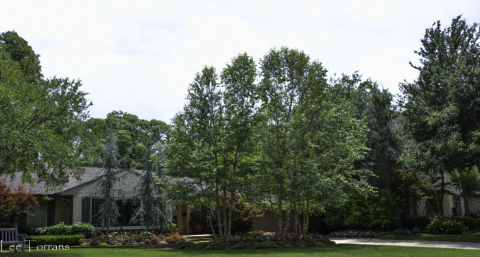 The Best Landscaping in Dallas June 2014