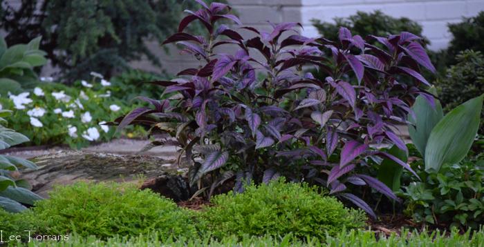 http://leeanntorrans.com/perfect-perennial-shade-garden/