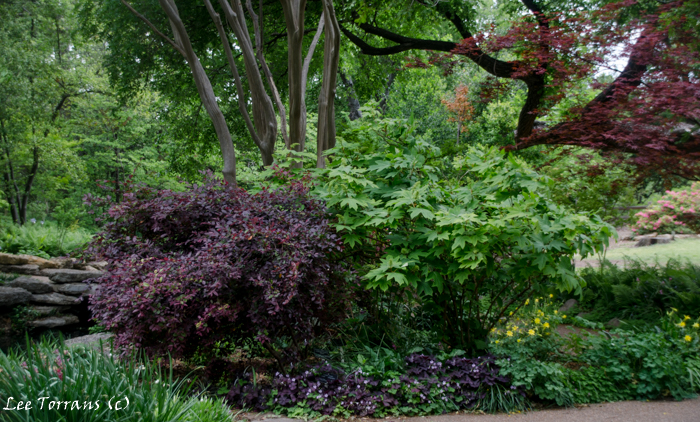 April and may texas perennials lee ann torrans gardening for Perennial wood