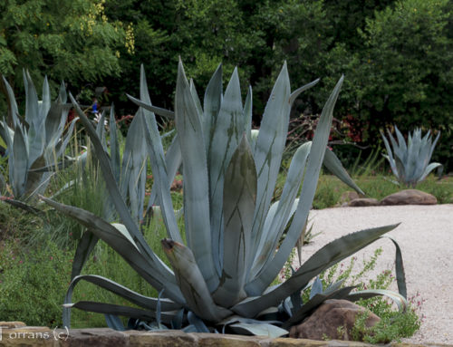 The Dallas Garden Embraces Native Plants