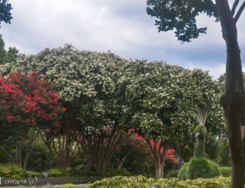 Dallas Public Gardens – Overview