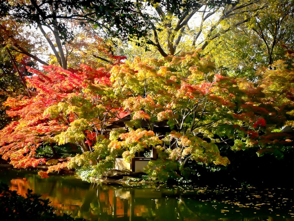 Japanese Gardens Fort Worth