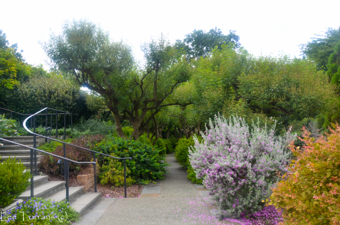 Poetry_Garden_Arboretum_Lee_Ann_Torrans-14