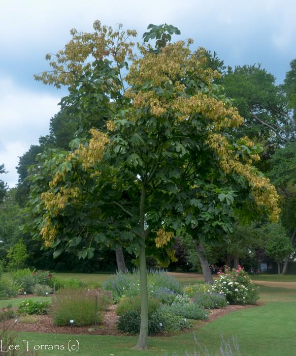Poisonous Tree - Plant