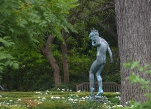 Dallas Arboretum Woodland Nymph Garden