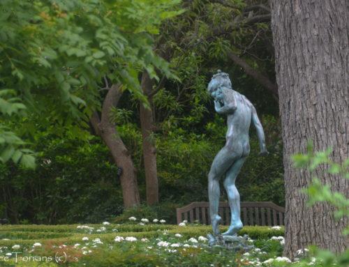 Dallas Arboretum Summer 2014