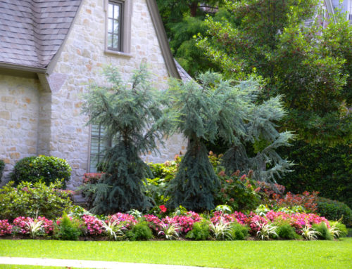 Cedars in Dallas Landscaping