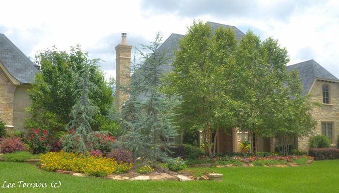 Texas landscape design lee ann torrans gardening for Dallas landscape design