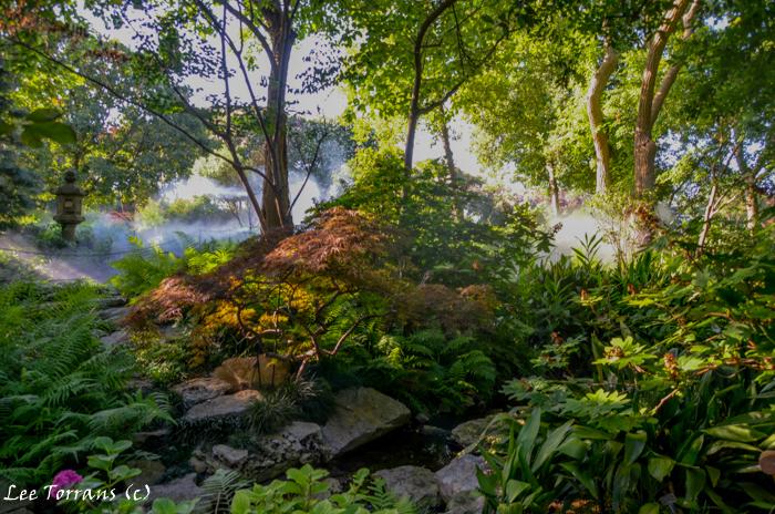 Wood fern with Japanese Maple. Dallas Arboretum landscaping design.