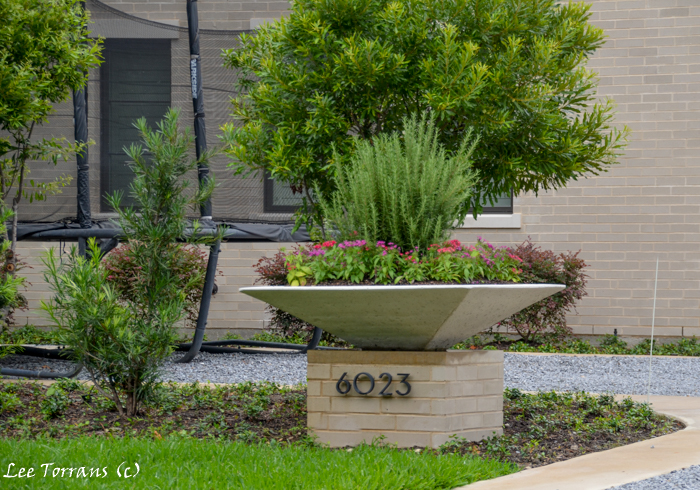 "Thyme perennial. Container Garden in Dallas Landscape Design. ""Rule of Three."""
