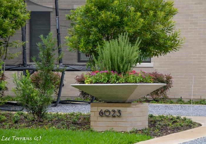 June perennials for texas lee ann torrans gardening for Dallas landscape design