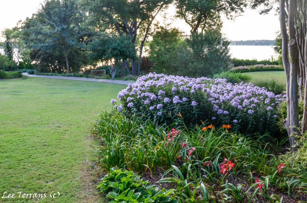 Summer Phlox Good Texas Perennial