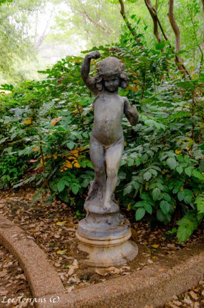 Mahonia with garden cherub in Fort Worth Botanical garden.