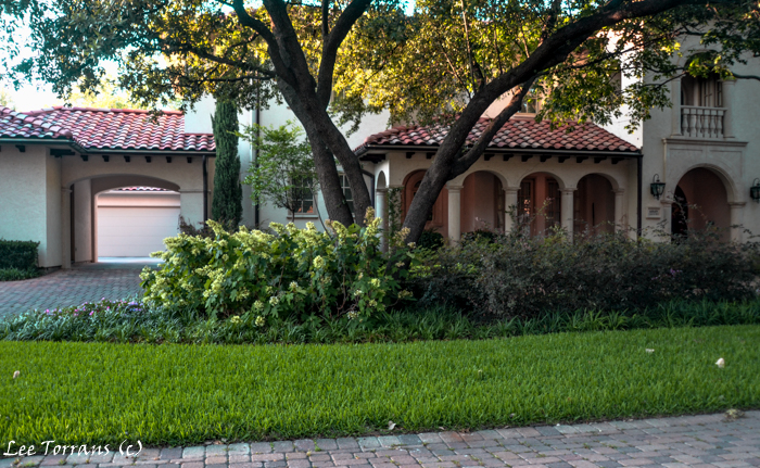 Dallas Landscaping Design with oak tree and oak leaf hydrangea.