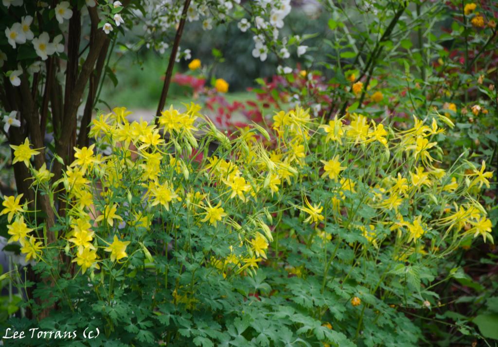 Lee ann torrans gardening texas gardening for Plants and shrubs