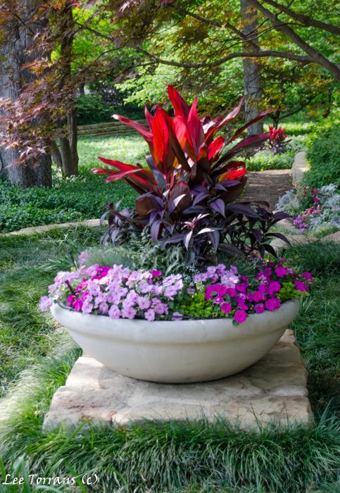 Purple crape myrtles lee ann torrans gardening for Garden design landscaping farmers branch